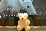PBL-1W White Little Bear (2pcs)